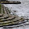 手賀沼公園の広場のツバメたち