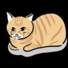 野良猫の駆除方法8選【被害防止、猫よけ、ゴミ漁り、ゴミ箱、追っ払う】