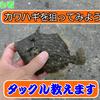 【カワハギ仕掛け】自作仕掛けでカワハギを狙う 簡単カワハギ釣りのススメ