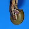 ちょっとヒトコト…フタコト…ミコト ~N0.18~  イワサキヒラタヘビ