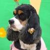 2018 医獣祭 犬・犬・犬! 4