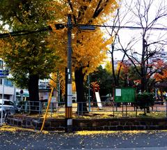★会社ちかくの公園