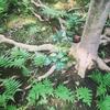 一番は庭にある。石像 石仏 根津美術館