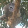 多摩動物公園に行ってきたので動物たちをひたすらアップする