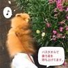 朝日を浴びて幸せホルモン散歩♪&懐かしのカモ!