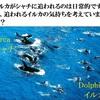 水産庁さん、「定置網の混獲イルカ」は水族館で保護してもいいんじゃない??? 改訂1版