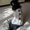 セリアの毛糸「マリーナブークレー」で編むチワワのサマーセーター
