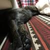 甲斐犬サンのサン月目標❗️の巻〜まいぺーすデイインジャナイ٩( ᐛ )و