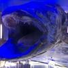 静岡レポート第二弾「深海水族館」「三保の松原」