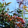 春はもう少し -- 樹木編