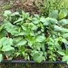 """畑からこんにちは! 210403   """"今シーズンの家庭菜園が本格的に始まりました!☝️😃"""""""