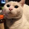 実家の猫が襲いかかってくるんだけど仲良くなる方法はある?勝手に近づいてくるくせに、噛み付いてくるのでガクブル。