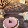 撮影用のピンクのお皿で