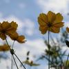 鼻高展望花の丘|コスモスの名所!迷路もある観光スポット:群馬県高崎市