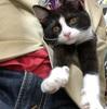 人手不足で猫の手も借りたい