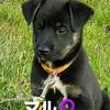 子犬の紹介~飼い主さんを募集いたします