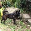 甲斐犬サンの憂鬱、スピッツ マコの不安❓ファン⁉️Fun‼️楽シイニナッテルジャンΣ(゚д゚lll)❗️