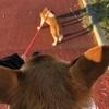 12月8日 河原猫の記録