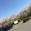 無料でお花見キャンプができちゃう超穴場!橘ふれあい公園キャンプ場(香取市)子連れキャンプ情報