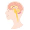 自律神経の乱れは腸で整える!