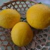 レモンの収穫時期は?