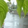 雨、雨、また雨