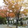 芦原公園の紅葉と母の新生活