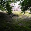 AZUR の木水千里によるマン・レイ論考