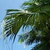 沖縄の竹富島をレンタサイクルで廻る。コンドイビーチの絶景!