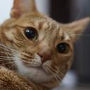 猫と介護 Bettyのブログ