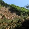 スギ林・ヒノキ林は、山地にある「畑」