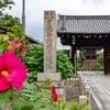 京都・洛中 - 芙蓉咲き始める 妙蓮寺
