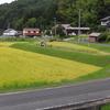 稲刈りと草焼き