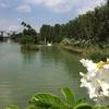 Day 2 in Singapore (人気ブランチカフェと綺麗な植物園)