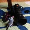 鳥の国へ旅立つカイヌシと居残りまめむ 台湾鳥的スポットとペットシッター編①