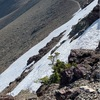 CDT 1日目 East Glacierから北上!