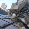 1月前半の #ねこ #cat #猫 その4