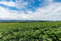 北見市端野に広がる畑の風景