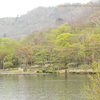 Mizunara-ミズナラ- ④ 水楢の木を探して-3