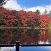 【ライフ】軽井沢の紅葉が素晴らしすぎた