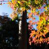 北鎌倉で紅葉を満喫する。by建長寺 Part3