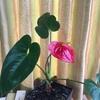 室内の花たちとアンガーマネジメント