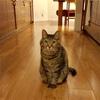 猫による迷惑行為