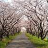 大島堤サイクリングロードで桜ジョギングする【2021年版】