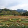 戸川公園の7万本のチューリップ2021.4.9「+その他」