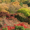 京都・八瀬の紅葉と秋色