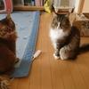 猫アルバム(2020年10月5週目)