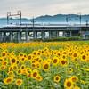 岐阜県観光大使の便利な交通情報~岐阜県、意外と行きやすい説~