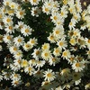 巣ごもりの日々 ー coronavirus/Japan Today/らじる☆らじる/春の花々