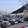 今年の桜 その4